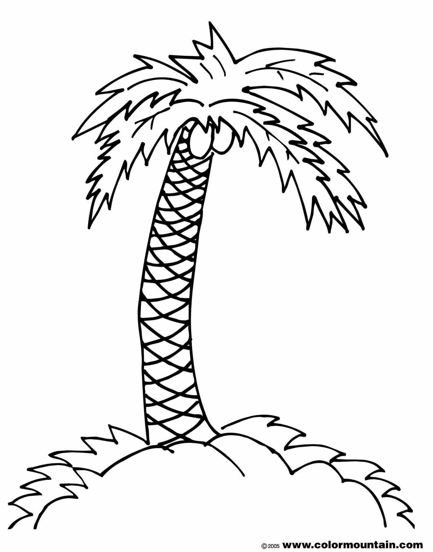 Simple Palm Tree Drawing At Getdrawings