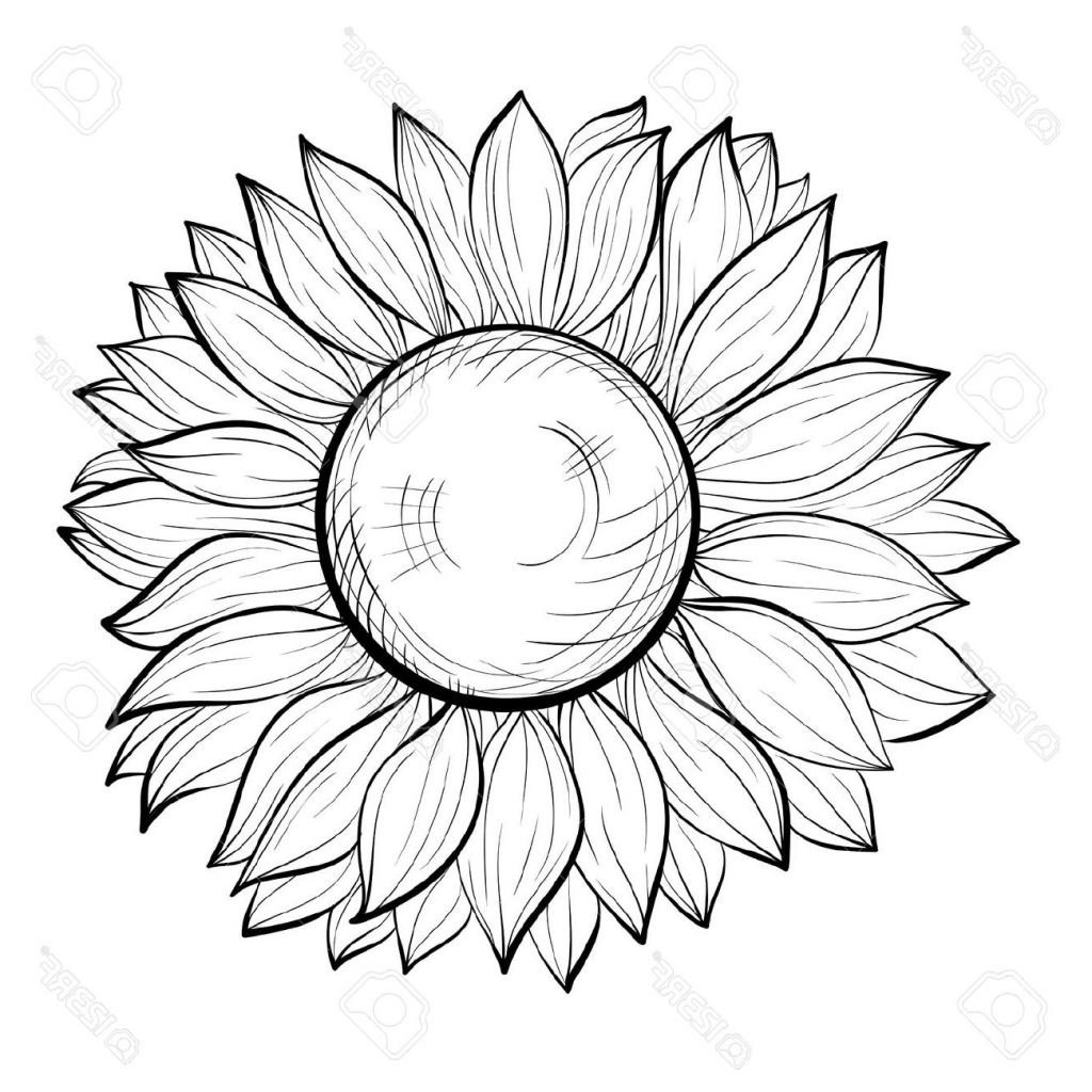 Sunflower Drawing Easy At Getdrawings Com