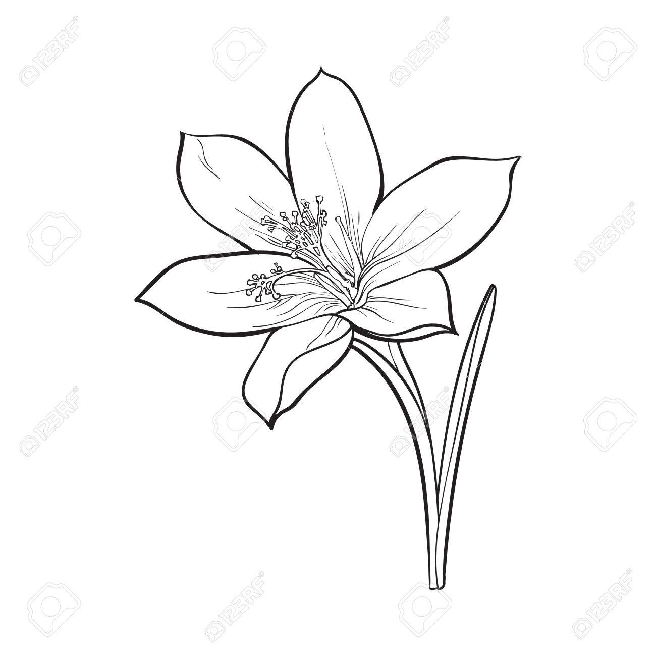Single Flower Drawing At Getdrawings