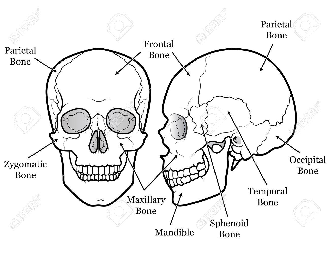 Skull Outline Drawing At Getdrawings