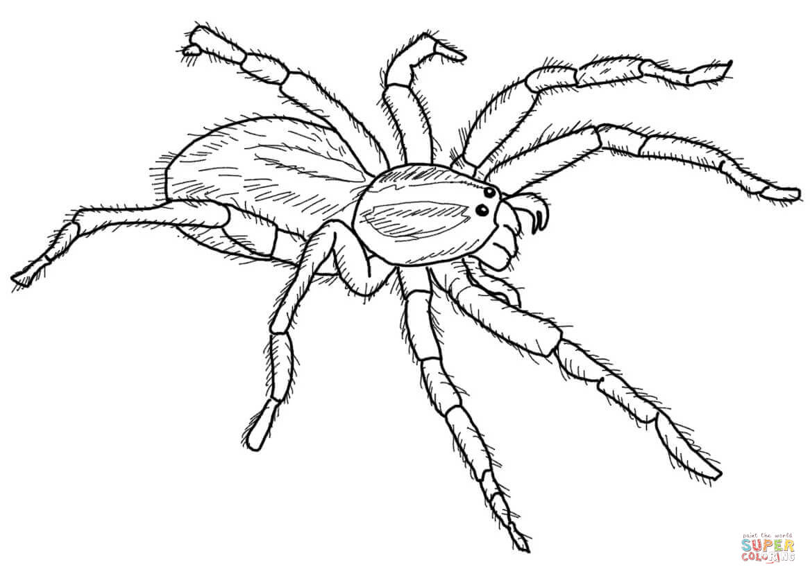 Spider Drawing At Getdrawings