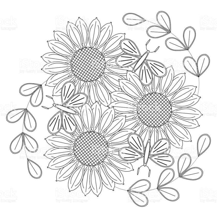 sunflowers drawing at getdrawings  free download