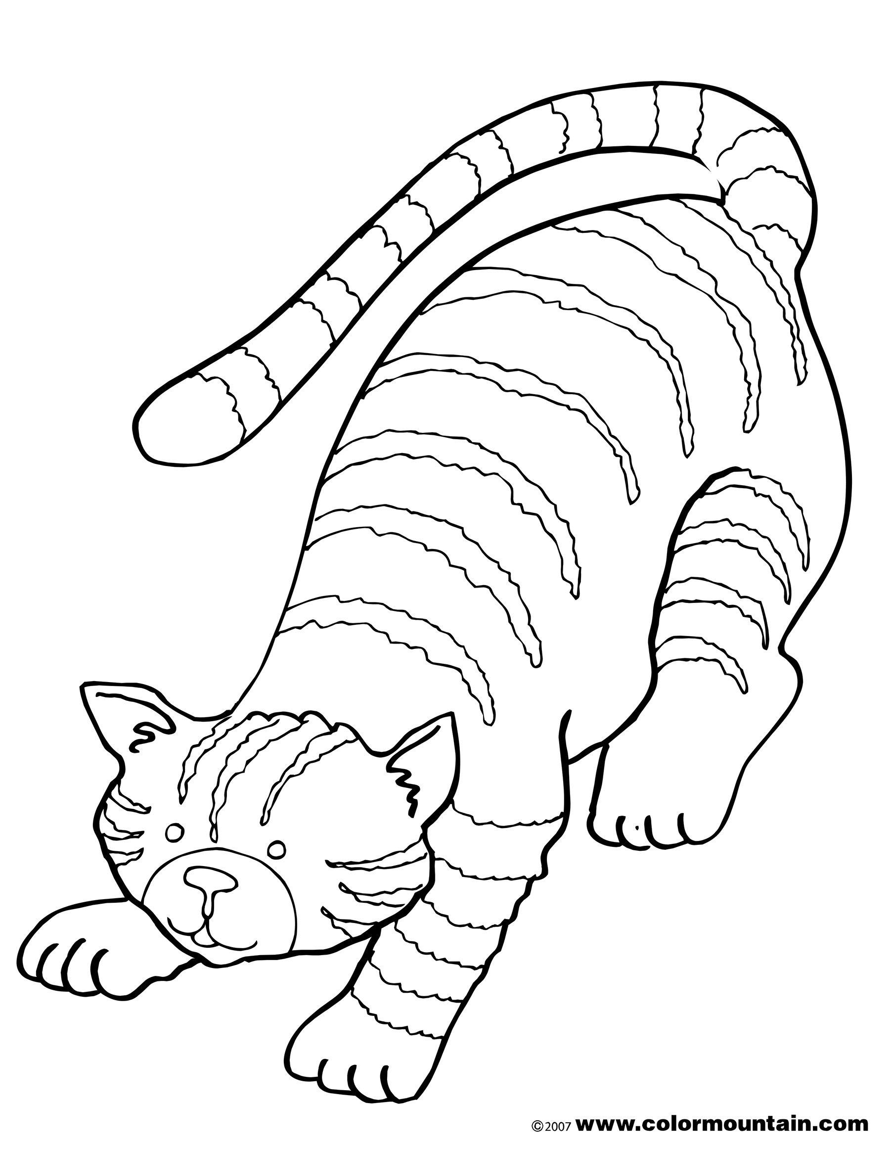 Tabby Cat Drawing At Getdrawings
