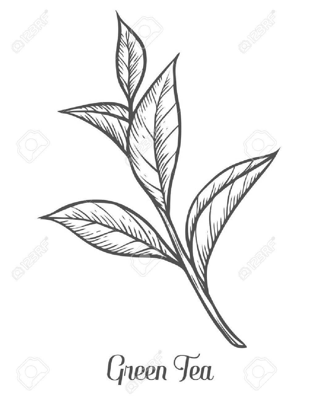 Tea Drawing At Getdrawings