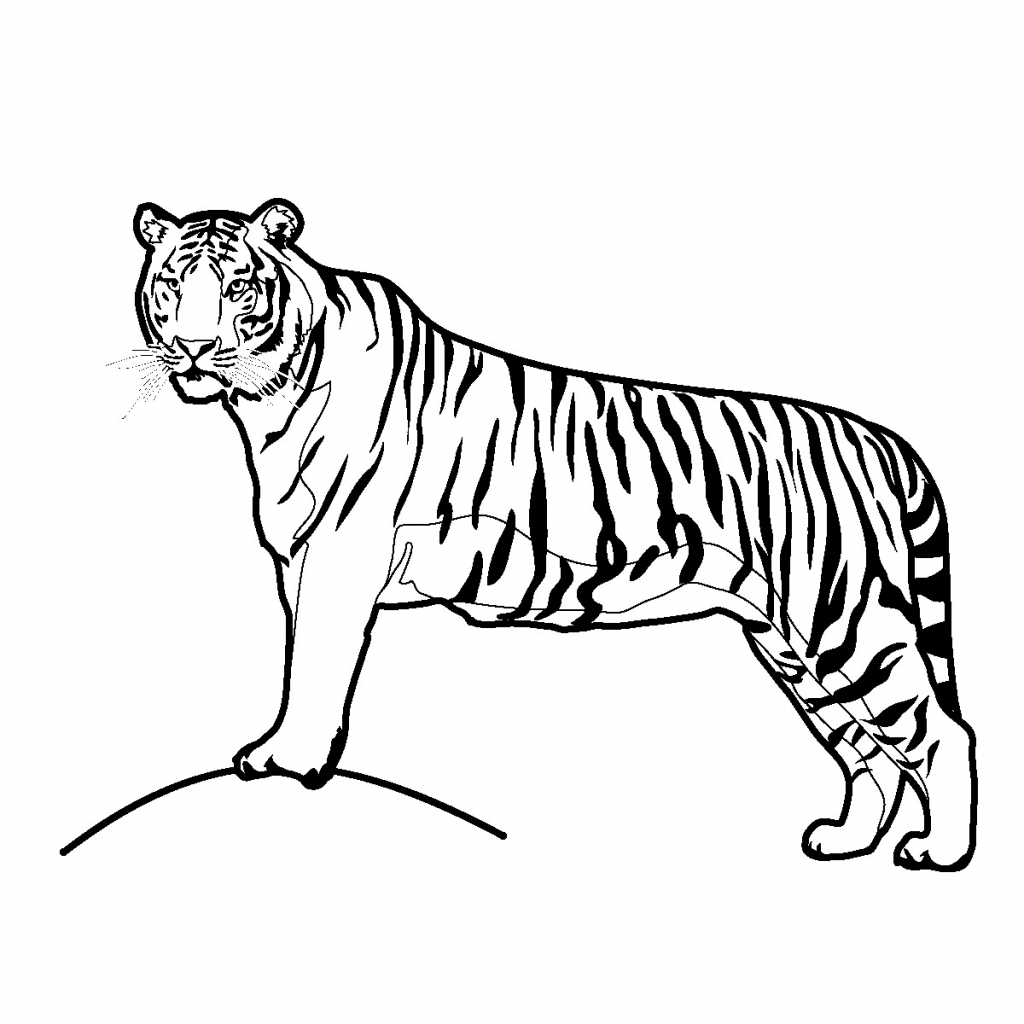 Tiger Drawing Pictures At Getdrawings