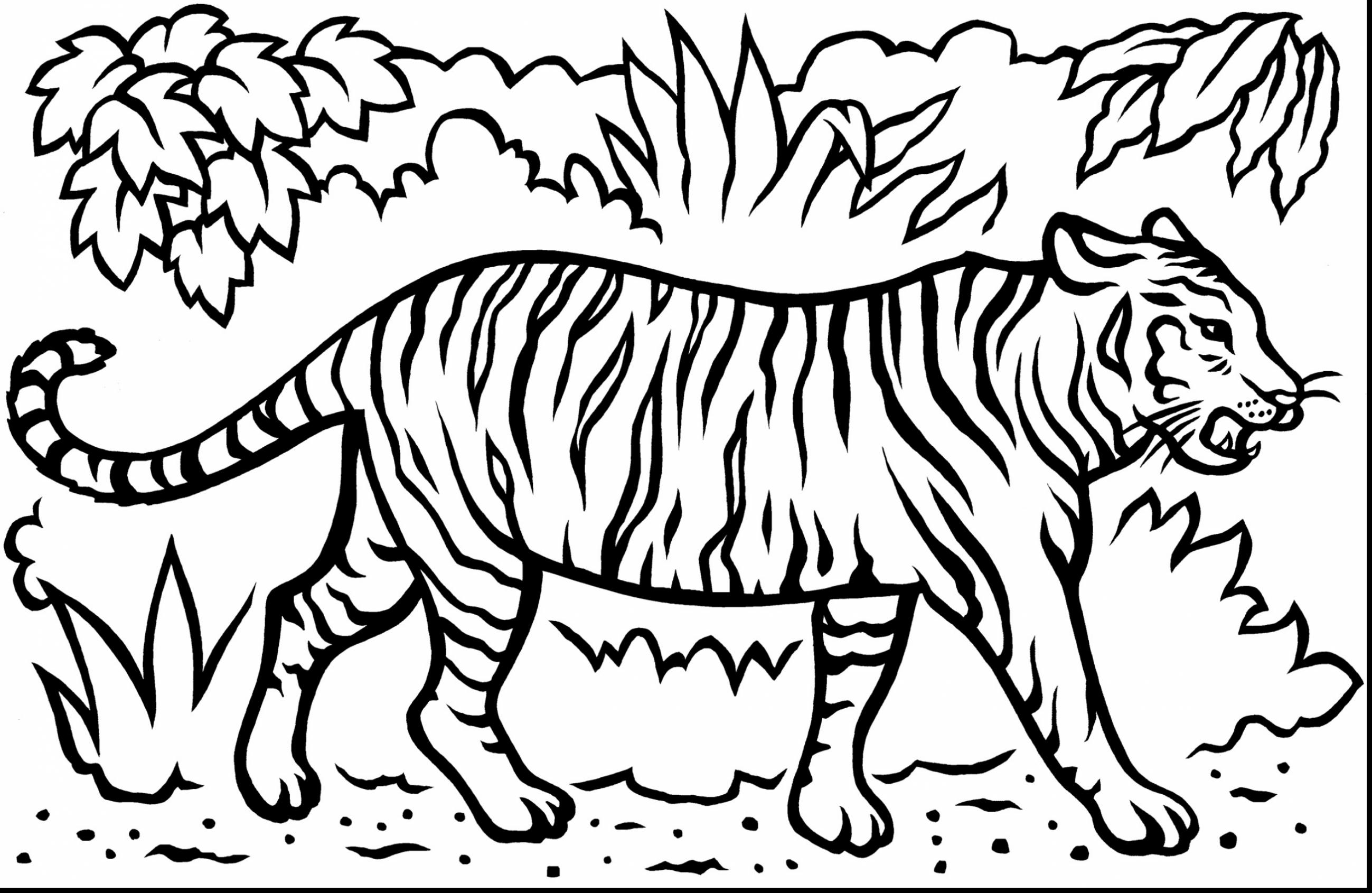 Tiger Print Drawing At Getdrawings