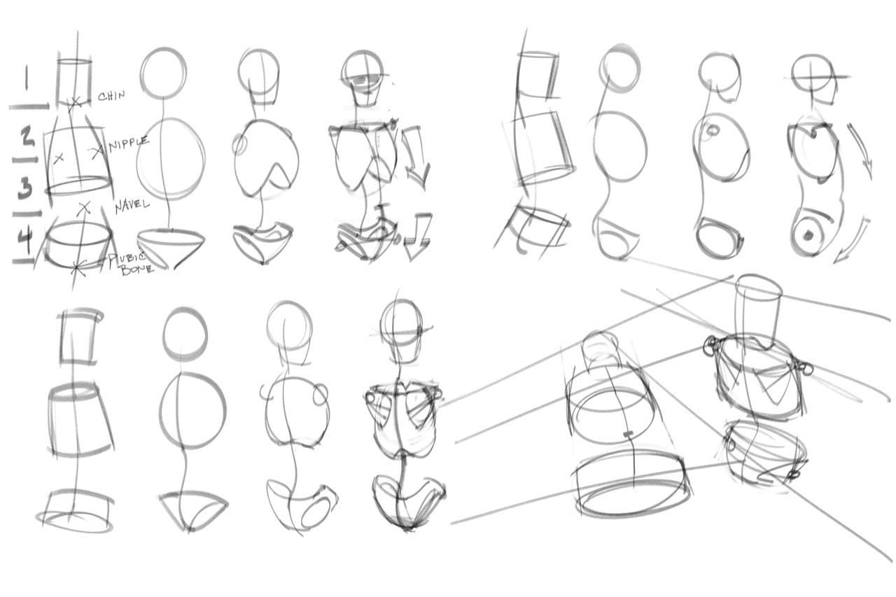 Torso Anatomy Drawing At Getdrawings