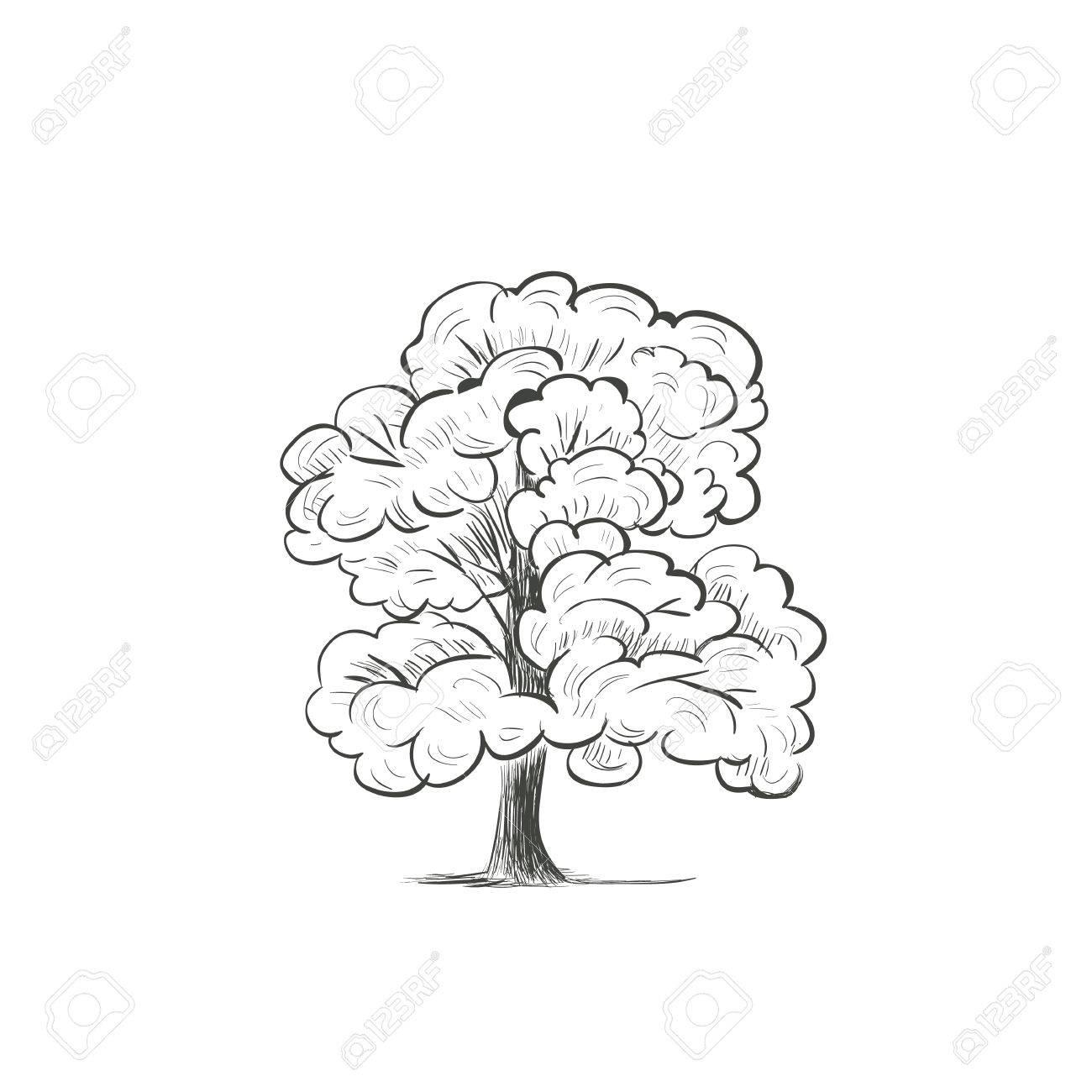 Tree Drawing Vector At Getdrawings