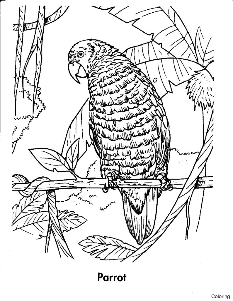 tropical rainforest drawing at getdrawings  free download