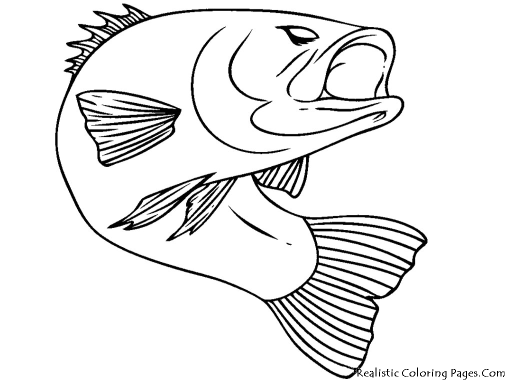Trout fish drawing 6