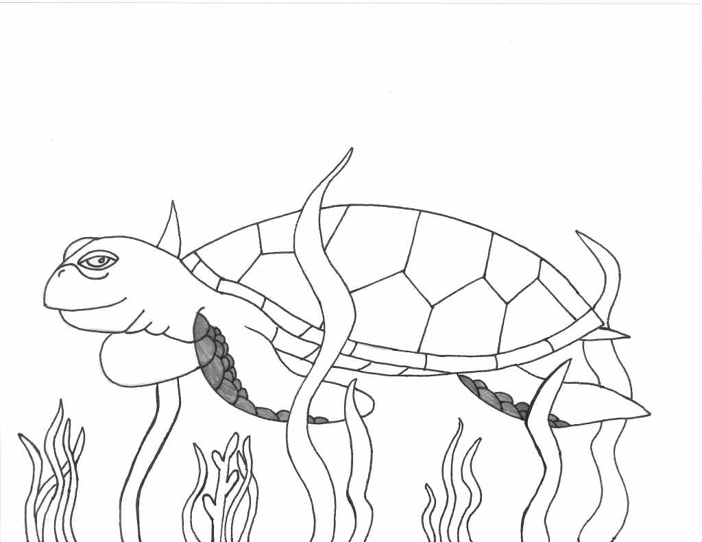 The Best Free Turtle Drawing Images Download From 50 Free Drawings Of Turtle At Getdrawings