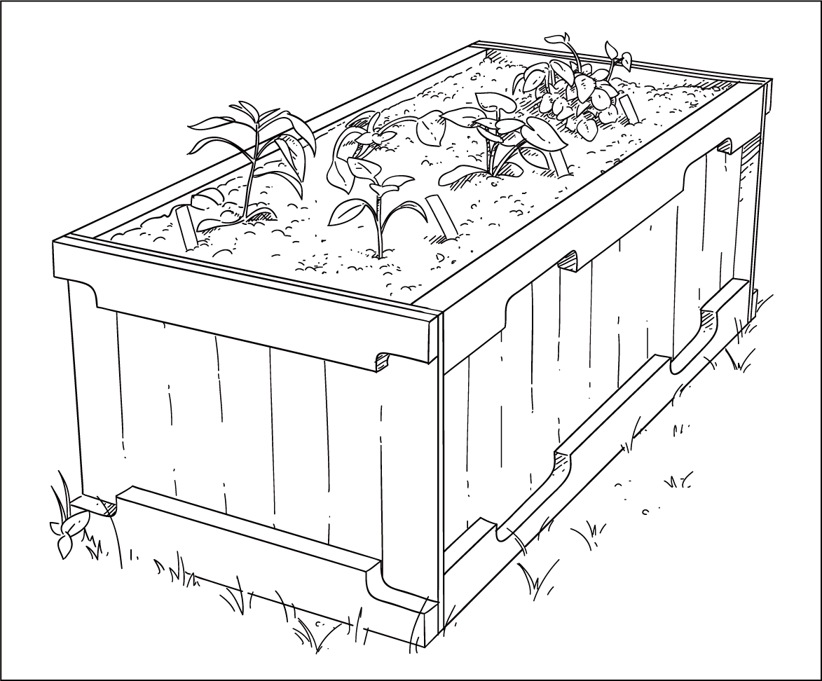 Vegetable Garden Drawing At Getdrawings