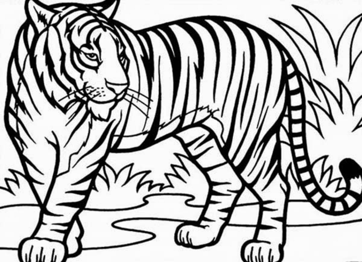 White Bengal Tiger Drawing At Getdrawings