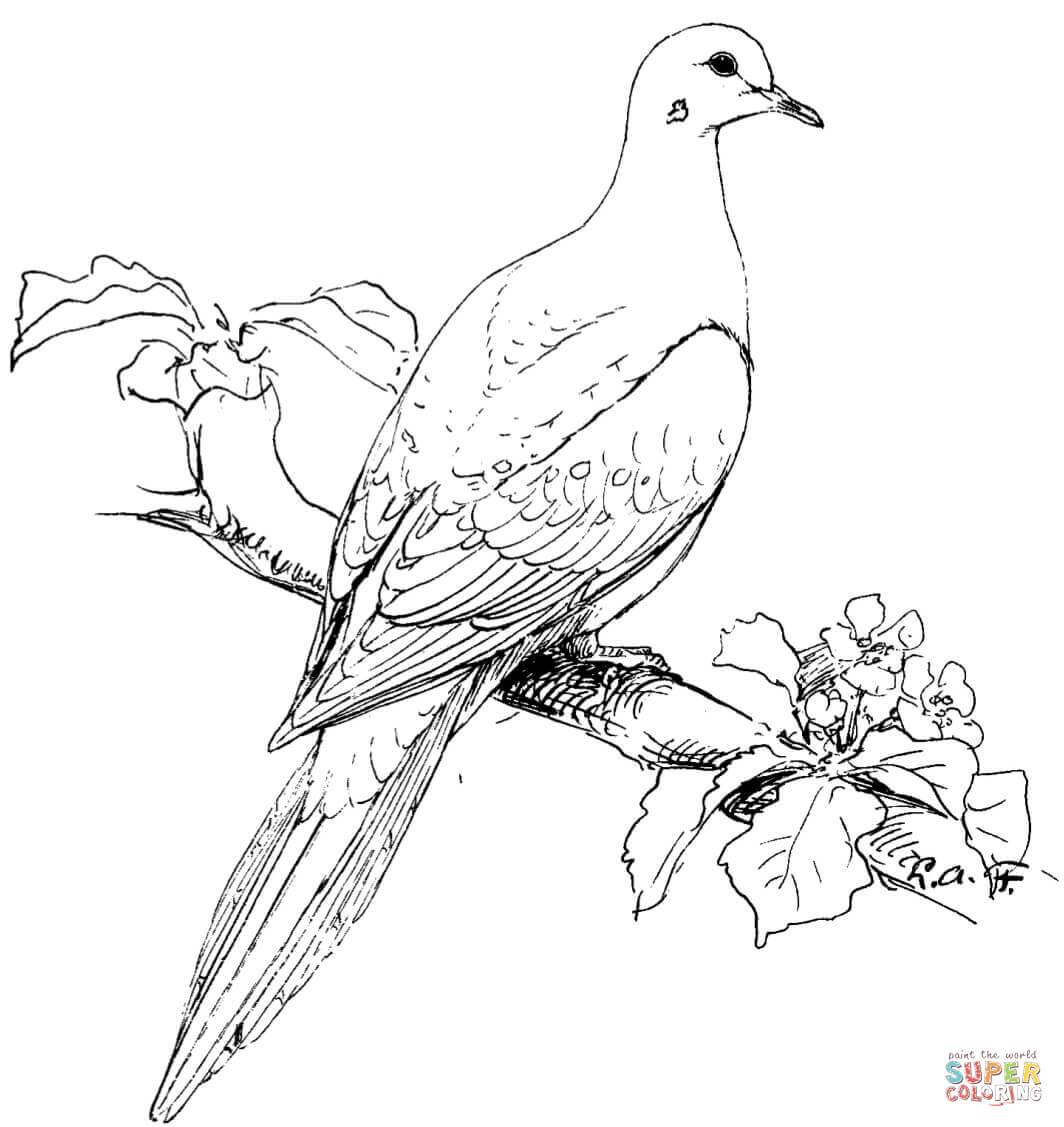 Wild Bird Drawing At Getdrawings