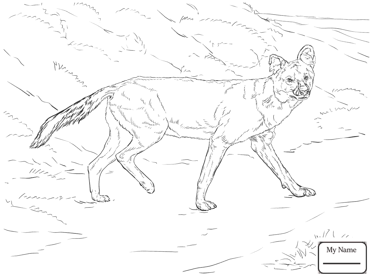 Wild Dogs Drawing At Getdrawings