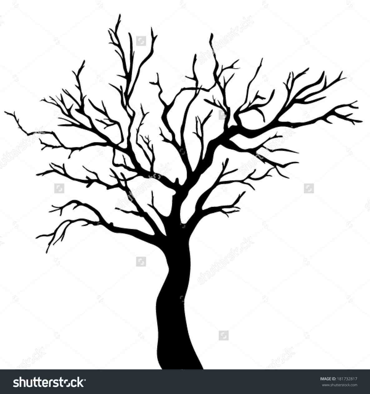 Willow Tree Drawing At Getdrawings