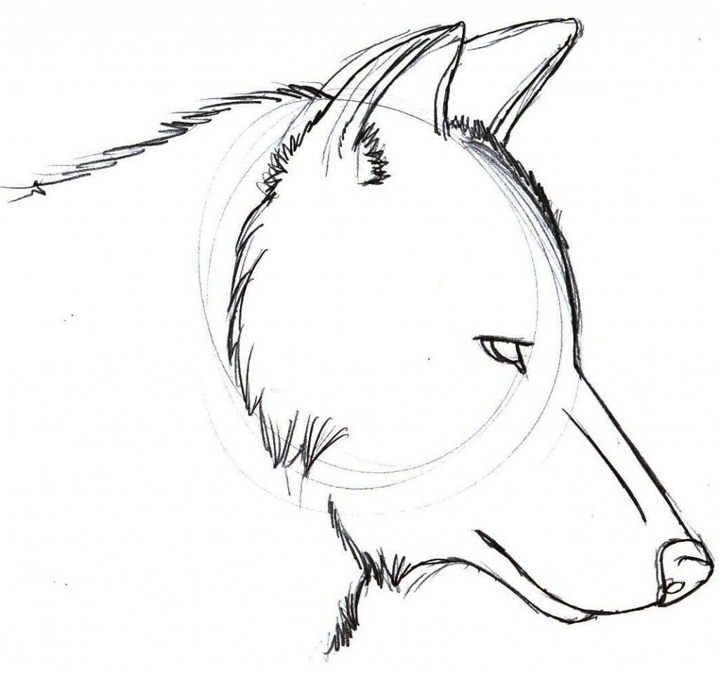 Wolf Pictures Drawing At Getdrawings