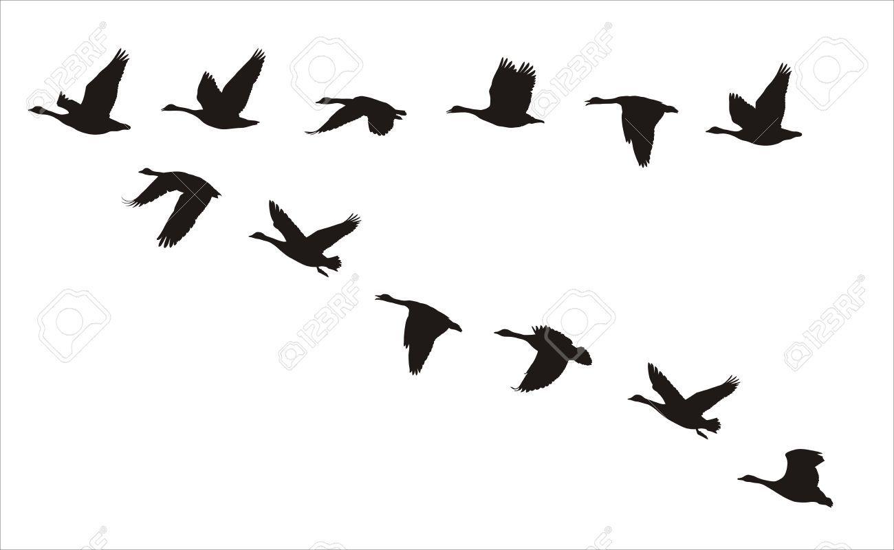 Canada Goose Silhouette At Getdrawings