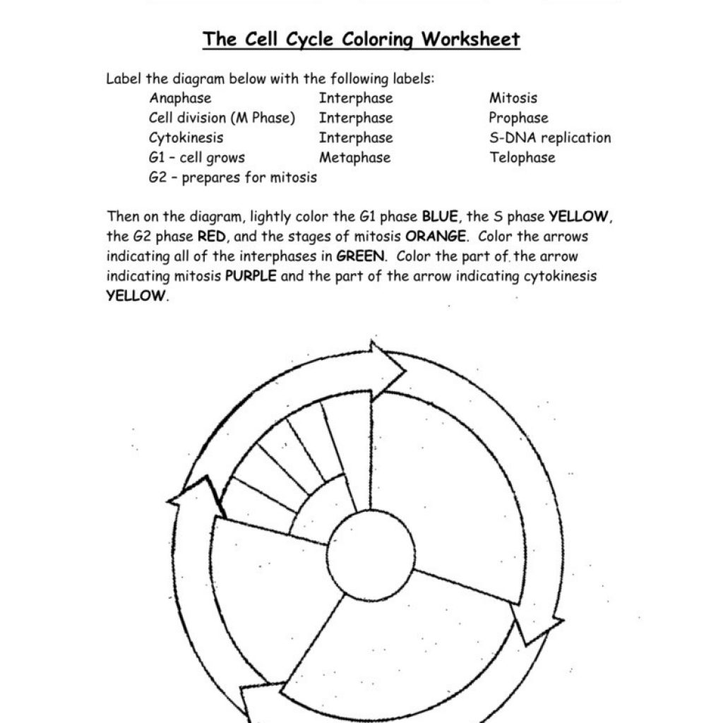 Worksheets Cell Cycle Labeling Worksheet Cheatslist Free Worksheets For Kids Amp Printable