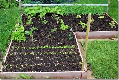 Garden June 19 2014 (1)