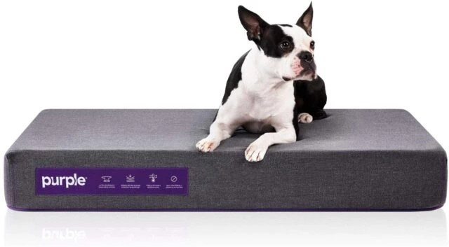 Purple The Pet Bed