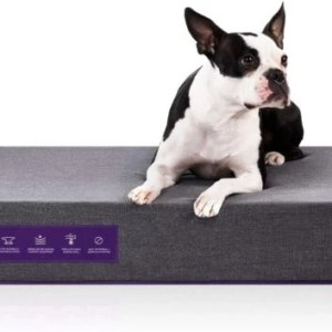Purple The Pet Bed