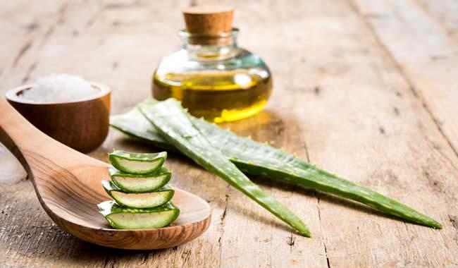Mixture of Aloe Vera gel with olive oil - - Gethealtysoon.info