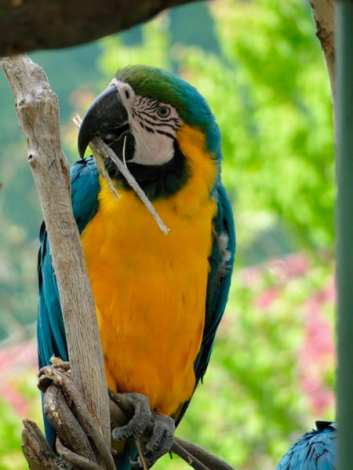asa zoo parrot