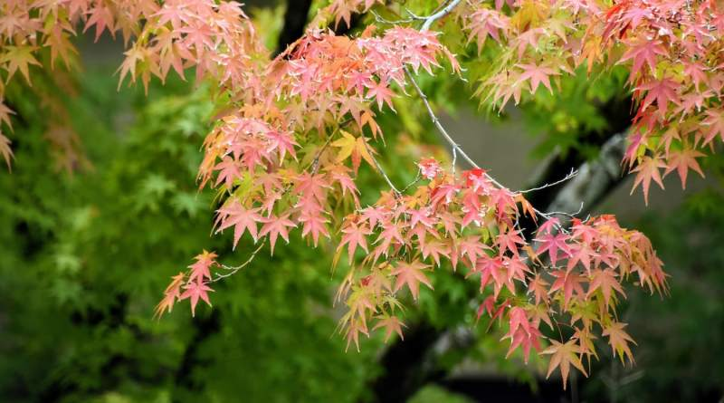 a guide to the most beautiful places to enjoy the autumn colors in hiroshima japan