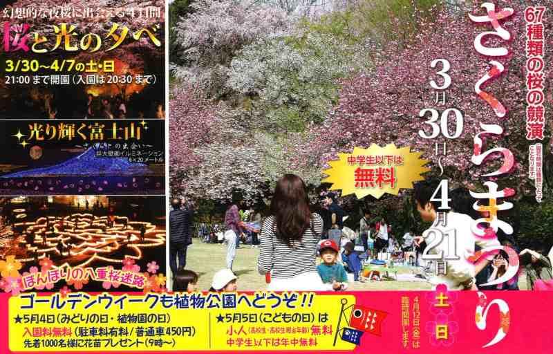 hiroshima-botanical-gardens-night-sakura-festival 2019