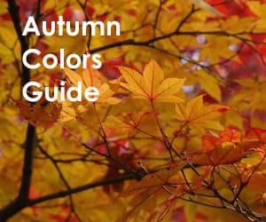 hiroshima japan autumn colors leaves guide