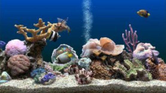 SereneScreen-Marine-Aquarium-Direct-Link-Free-Download