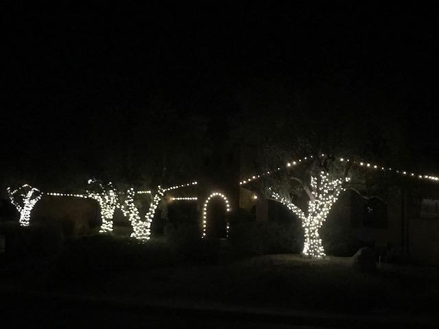 rancho-santa-fe-christmas-lights-trees