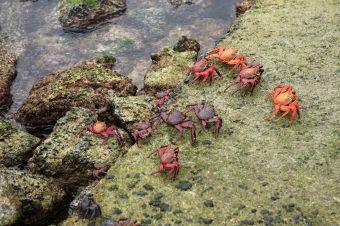 crabs sm