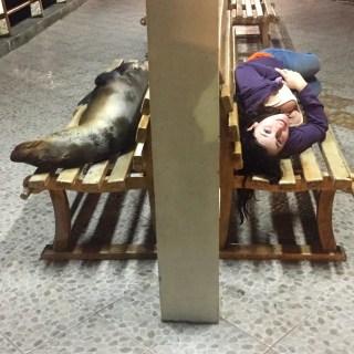 me bench lobo
