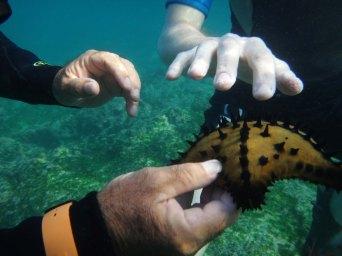 starfishswim sm