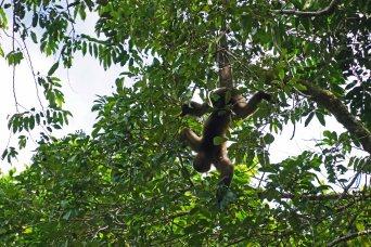 16 monkey sm