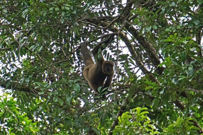 19 monkey sm