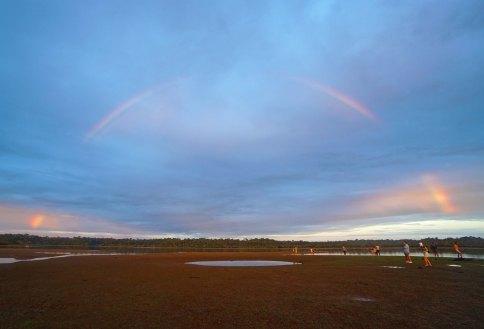 33 rainbow sm