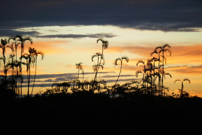 35 sunset sm