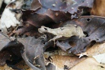 69 froggy sm