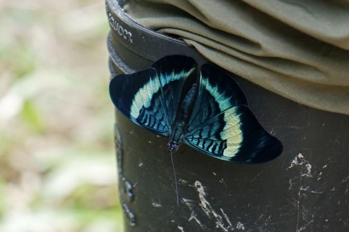 74 butterfly sm
