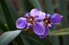 28 orchids purple sm
