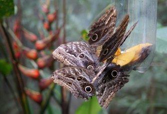 30 butterflies feeding sm