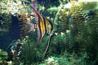 13 fishy sm
