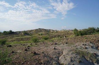 19 landscape sm