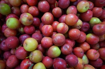 34 fruit sm