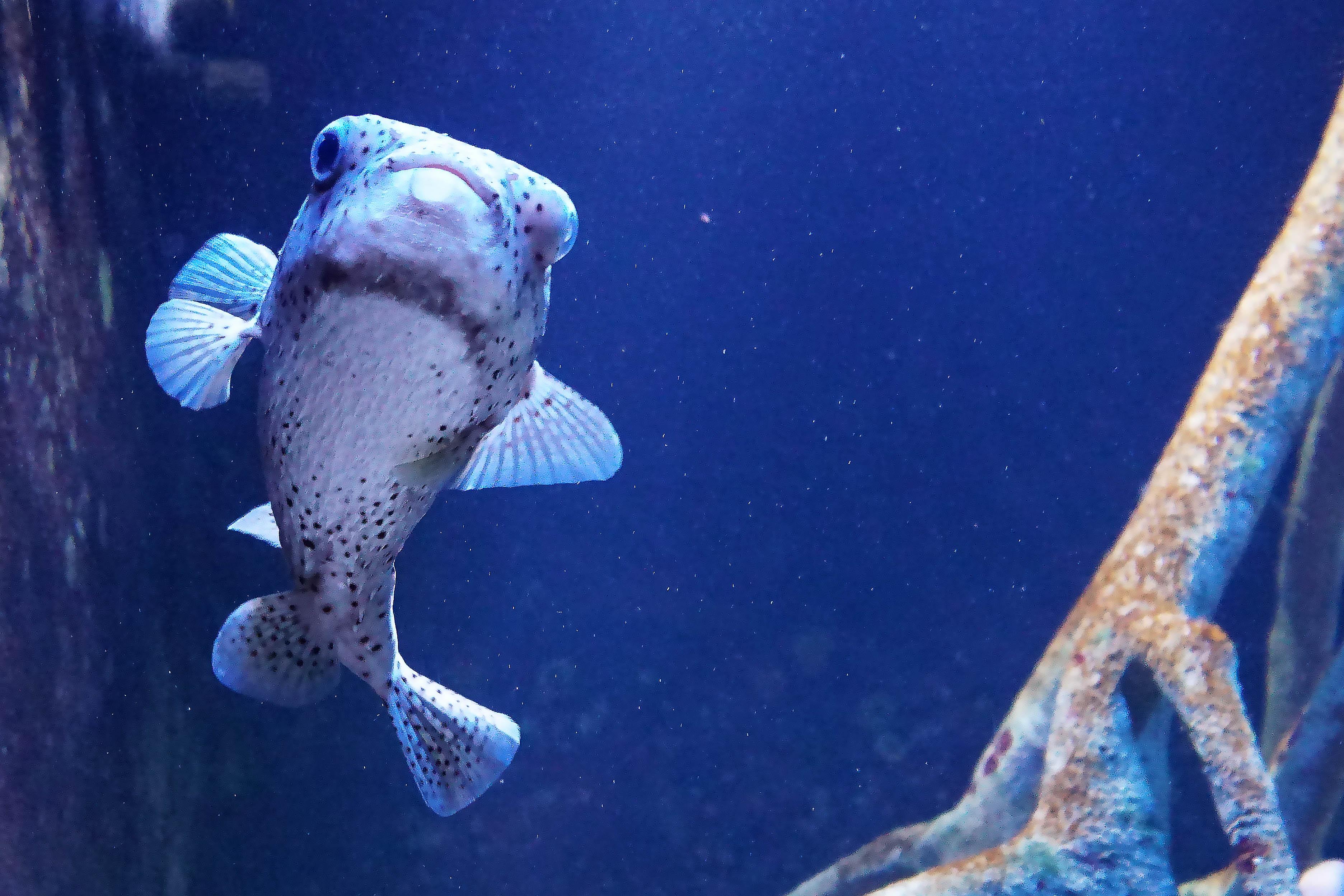 5 fishy sm