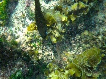 fishy2 sm