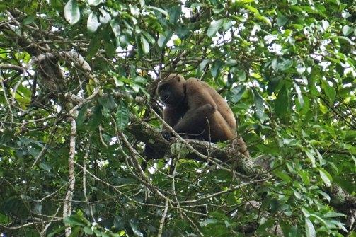 15 monkey sm